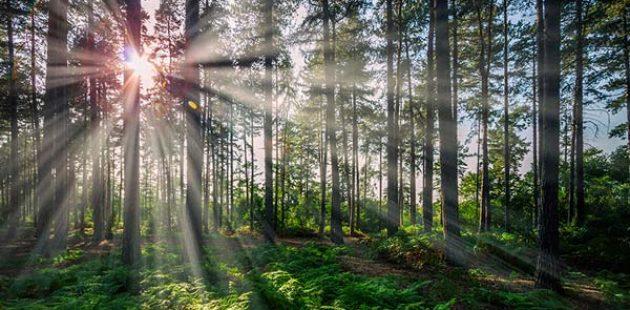 Abatec Wprost z lasów Skandynawii